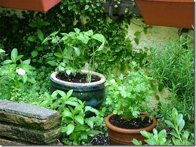 herb-garden_opt